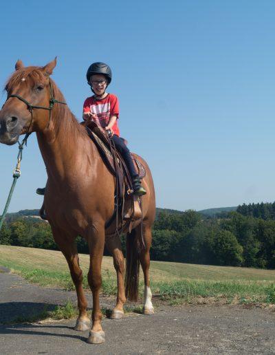 Junge Pferd-41
